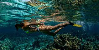 snorkeling images Snorkeling bonaire official tourism site jpg