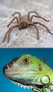 reptiles terrariums feeders u0026 supplies chatsworth ca exotic
