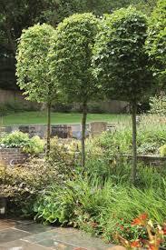 trees in small gardens cori matt garden