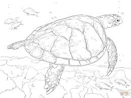 realistic hawksbill sea turtle coloring free printable