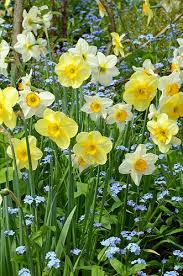401 best buttercup glade images on pinterest cottage country