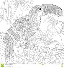 toucan coloring page stock illustration image 70979076