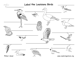 Louisiana birds images Louisiana habitats mammals birds amphibians reptiles jpg