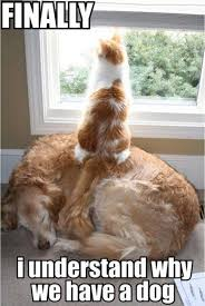 Funny Cat And Dog Memes - cat vs dog memes which are too funny viral slacker