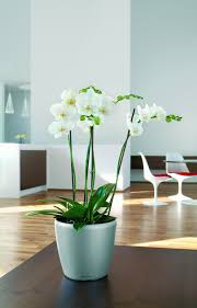 self water planter self watering planters lechuza 28 images lechuza white all in