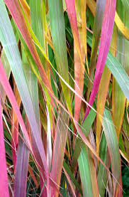 landscapes find the best ornamental grasses for