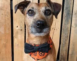 Halloween Dog Costume Halloween Dog Collar Etsy