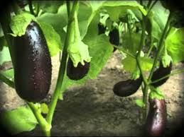 how to plant a vegetable garden tips on growing home grown