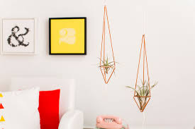how to care for the lovely air plants that adorn your home copper plant hanger for air plants