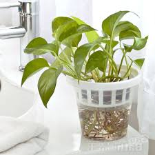 indoor planting pots home design ideas