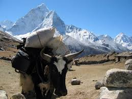 gear list alpine ascents international