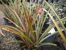 plant inventory richard lyons nursery inc