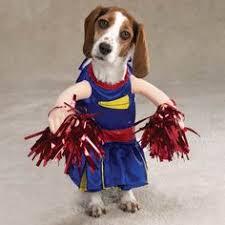 Funny Halloween Animal Costumes 62 Halloween Dog Costumes Costumes Dog