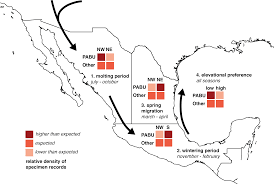 Waterfowl Migration Map Assessing Migration Patterns In Passerina Ciris Using The World U0027s