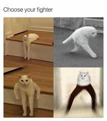 Cat Fight Meme - most anticipated fighting game 2017 choose your class know