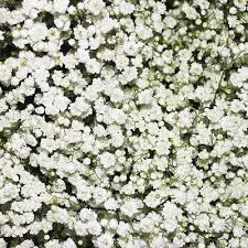 Bulk Baby S Breath The 25 Best Baby U0027s Breath Bulk Ideas On Pinterest Cheap Wedding