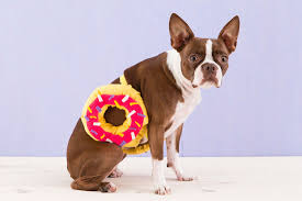 Dog Ghost Halloween Costumes by How To Dress Your Pet Up Like A Donut For Halloween Brit Co