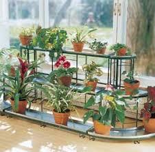 indoor gardening gardening indoors houseplants growing houseplants