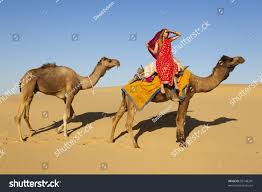 thar desert animals young women wearing saree riding camel stock photo 95148295
