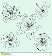 set of hawaii hibiscus flowers leaves stock vector image 73947638