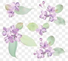 lilac flowers royalty free purple lilac clip vector images illustrations