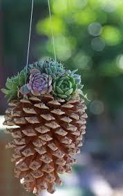 appealing succulent planter ideas 54 succulent pot plant ideas