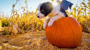 puppy halloween youtube