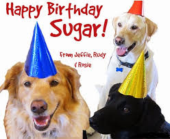 Birthday Dog Meme - happy birthday dog wishes images meme for your doggy