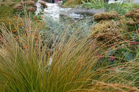 ornamental grasses demystified garden mentors