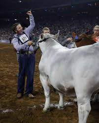 steer bring in big bucks at rodeo auction houston chronicle