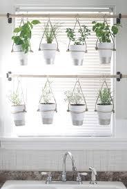 52 best indoor garden images on pinterest indoor plants indoor