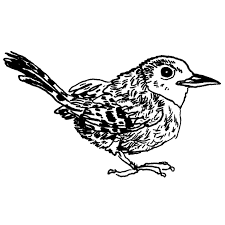 house wren audubon field guide