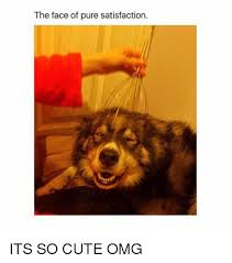 So Cute Meme Face - the face of pure satisfaction its so cute omg cute meme on