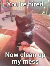 Cute Funny Cat Memes - yup this funny cat is saying you are hired now clean up my mess
