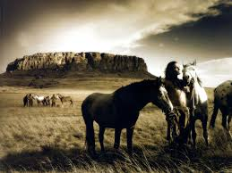 Horse Murals by Wild Horse Wallpapers Group 74