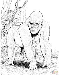 gorilla in jungle coloring page free printable coloring pages