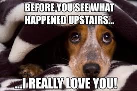 funny dog memes biggle ilove messages
