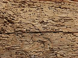what is woodworm and how can you prevent it