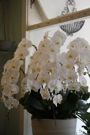 wild orchid home decor 86 best cambria like orchid images on pinterest orchids flowers