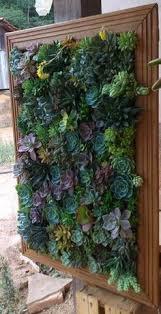 succulent vertical garden mural by merino flora vertical garden