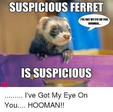 I Got My Eyes On You Meme - suspicious ferret ive got mveye on you hooman is suspicious i ve got