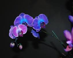 Blue Orchids Blue Orchids Picture Of Chicago Botanic Garden Glencoe