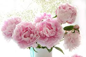 Peony Bouquet Dreamy Shabby Chic Cottage Pink Peonies Print Peony Bouquet