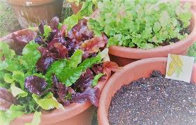 creating a container garden for vegetables herbs and flowers