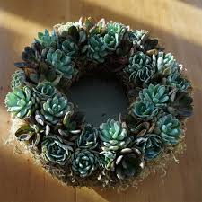 succulent wreath living succulent wreath or echeveria wreath 12