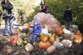 New York Botanical Garden Pumpkin Carving by The Best Fall Festivals In New York City