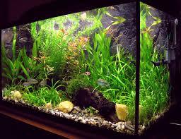 aquarium wikipedia