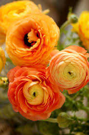 106 best orange flowers images on pinterest orange flowers