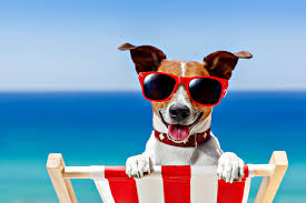 Pet Friendly Beach Houses In Gulf Shores Al by These Dog Friendly Beaches Welcome Your Furry Friends
