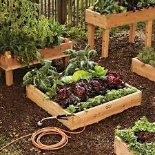 how to grow an edible garden williams sonoma taste